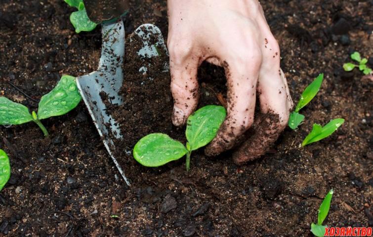 14 растений, которые нельзя сажать рядом