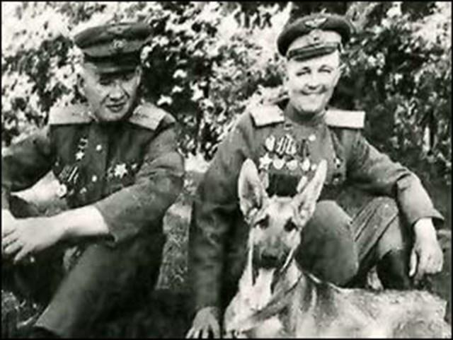 Джульбарс – первый и единственный пес, получивший настоящую боевую награду во время войны история
