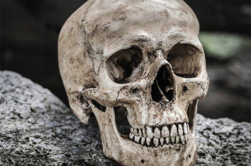 Таинственный предок человека загадка, парадокс, природа