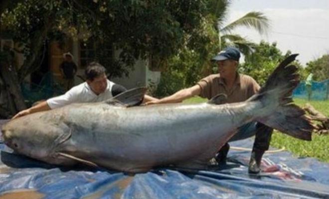 10 самых крупных уловов: рыбак достал удочкой кальмара размером с автобус Культура
