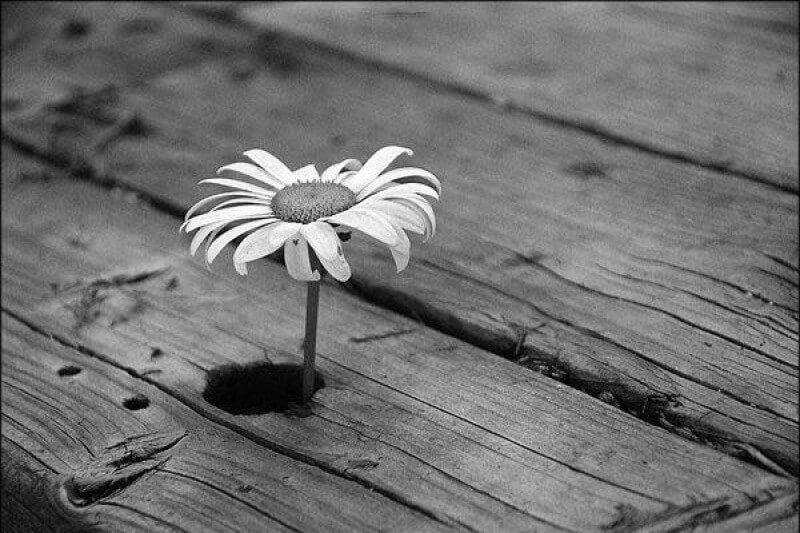 черно белые картинки со смыслом жизни просят соблюдать социальную