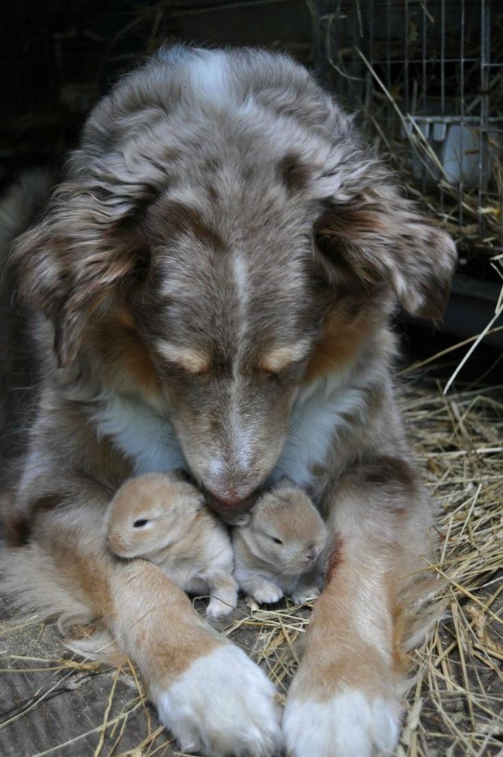 первую очередь приемные семьи животных фото знакомство