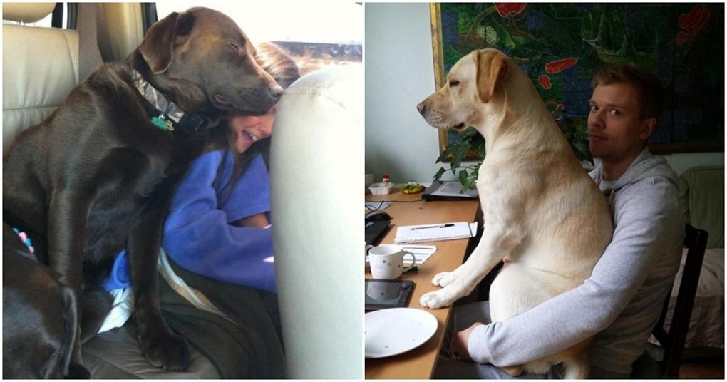 15 уморительных фото с собак…