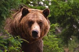 Хорошо, что медведь был сытый и добрый, а геолога переклинило