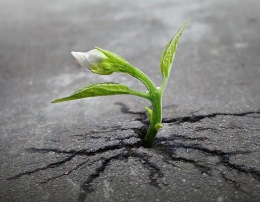 МИР РАСТЕНИЙ. Как росток пробивает асфальт?