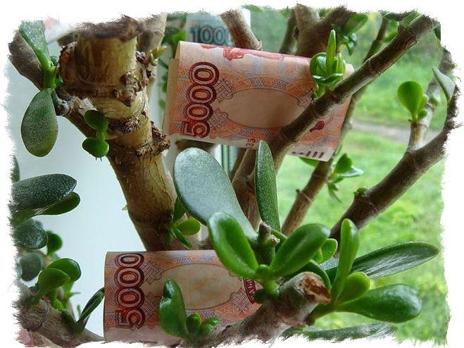 заговор при посадке денежного дерева