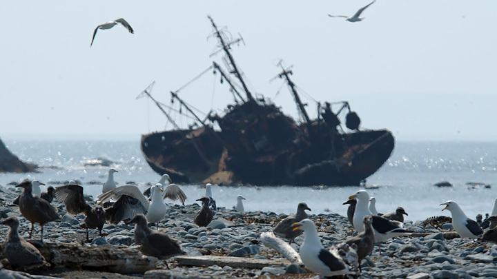 Камчатка – только начало: Политики добрались до экологии, и вот результат россия