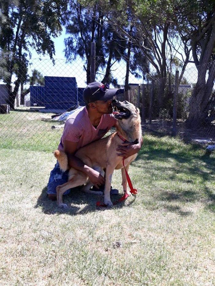 Верный пёс спас хозяина, но получил удар ножом в голову… Он выжил чудом