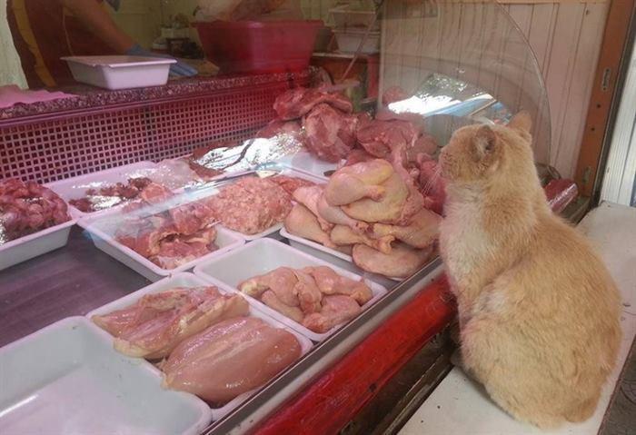 Кот просил еду в магазине, а полученное мясо уносил в неизвестном направлении