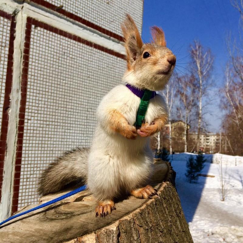 Жительница Новосибирска спасла выпавшего из гнезда бельчонка