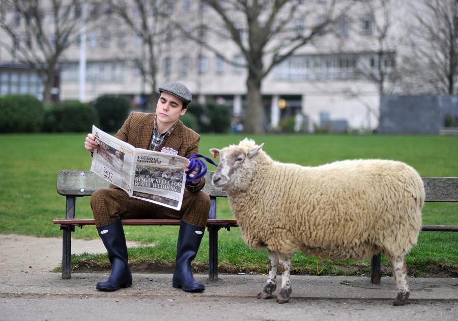 Картинки приколы с овцами