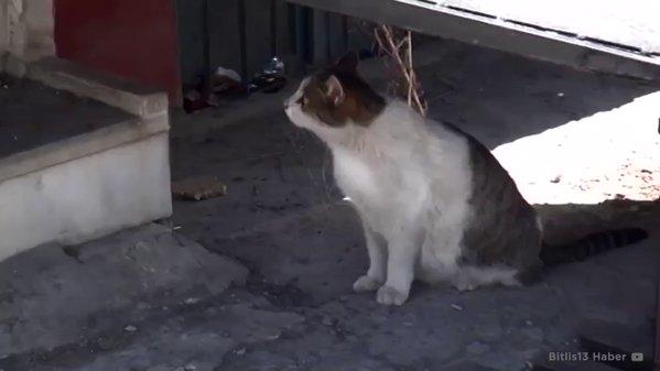Удивительное видео: беременная кошка пришла за помощью в медцентр
