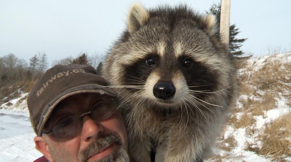 Просто доброта. В Канаде бизнесмен спас голодающего в яме енота