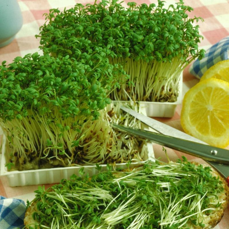 легко и быстро салат