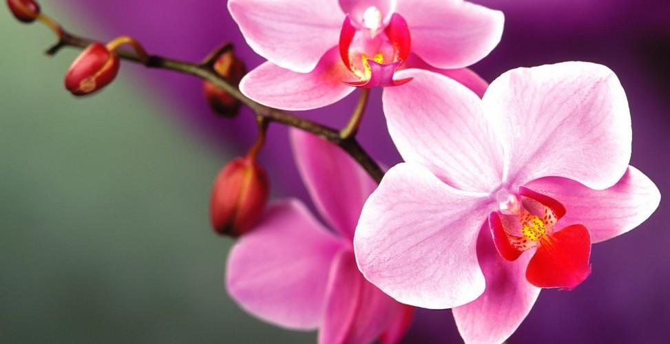 Фото орхидеи в высоком разрешении