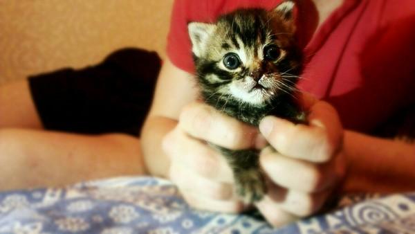 Дачники разобрали свой дом, чтоб найти… замечательного котёнка!