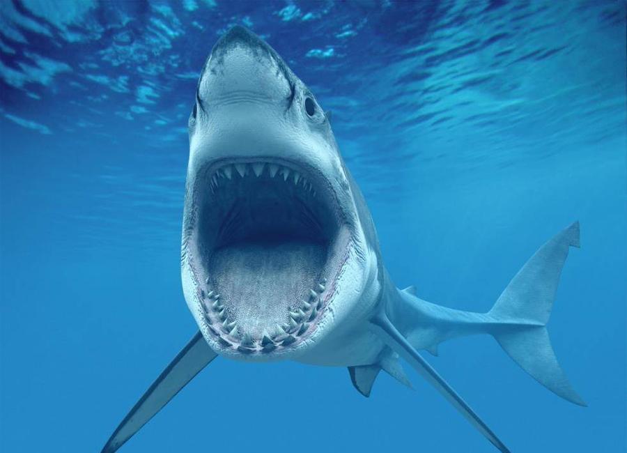 Глупые мифы об акулах