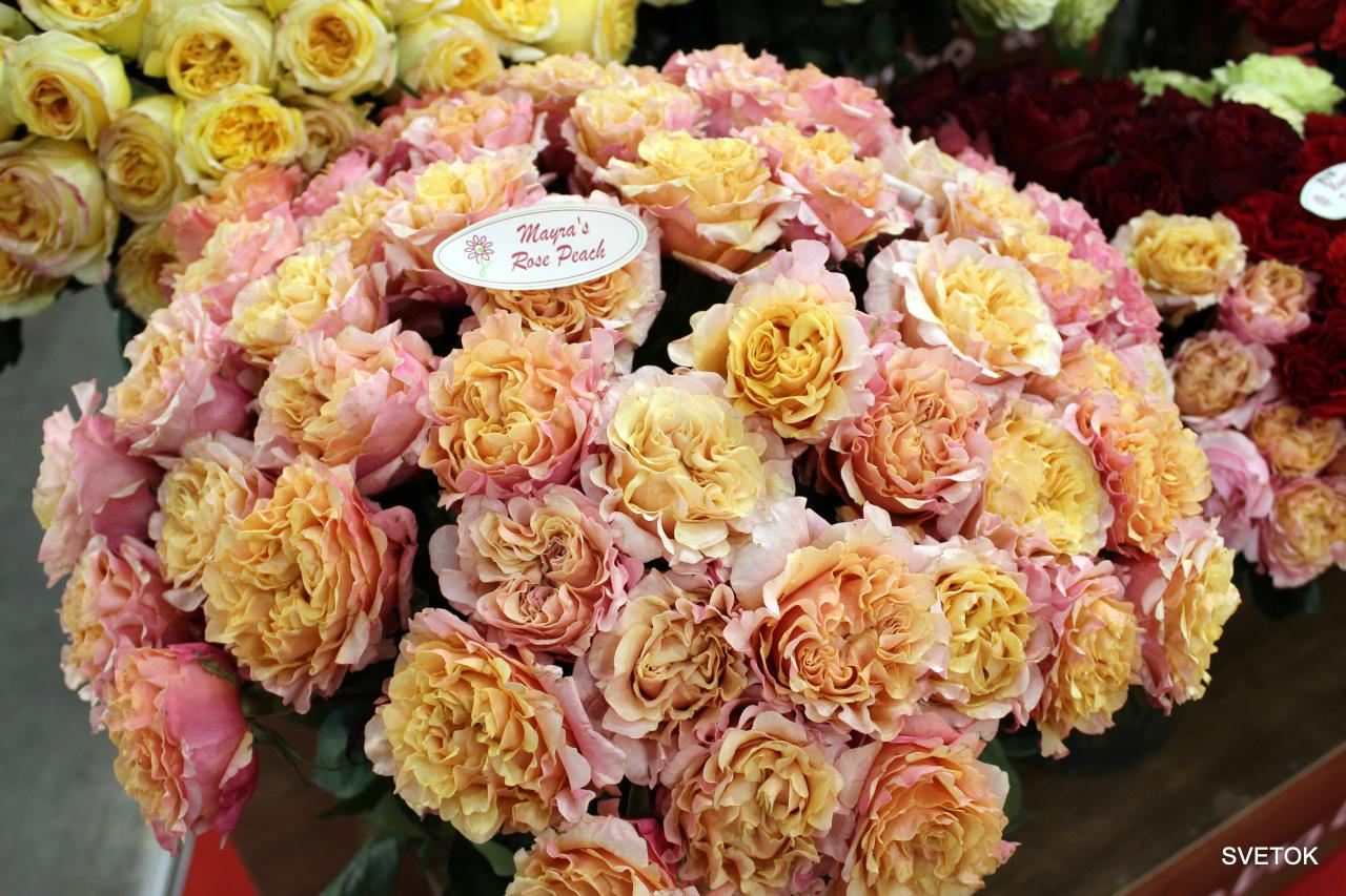 Розы с выставки.