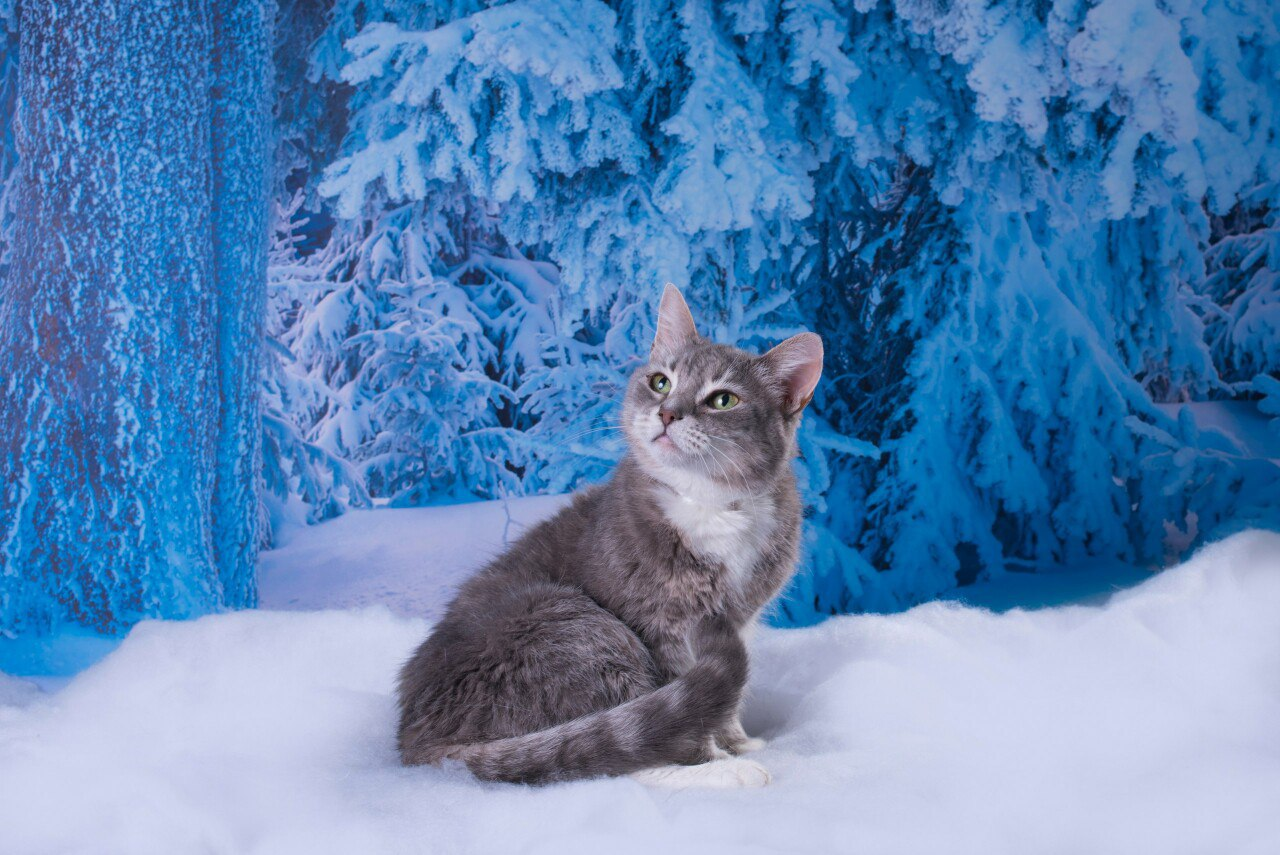 при близком картинки кошек зимние несколько лет актрисы