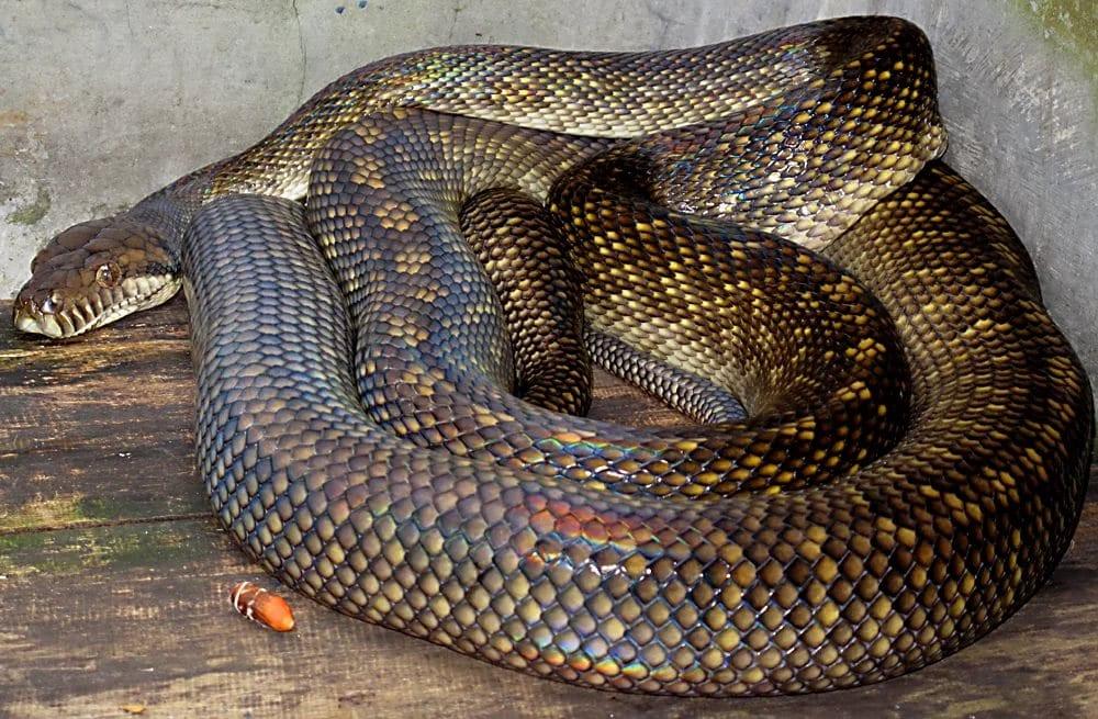 крайнем картинки толстых змей каждый