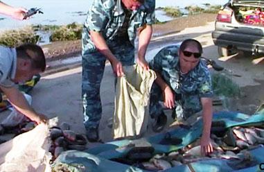 Рыбаки выловили рыбу на запрещенную приманку