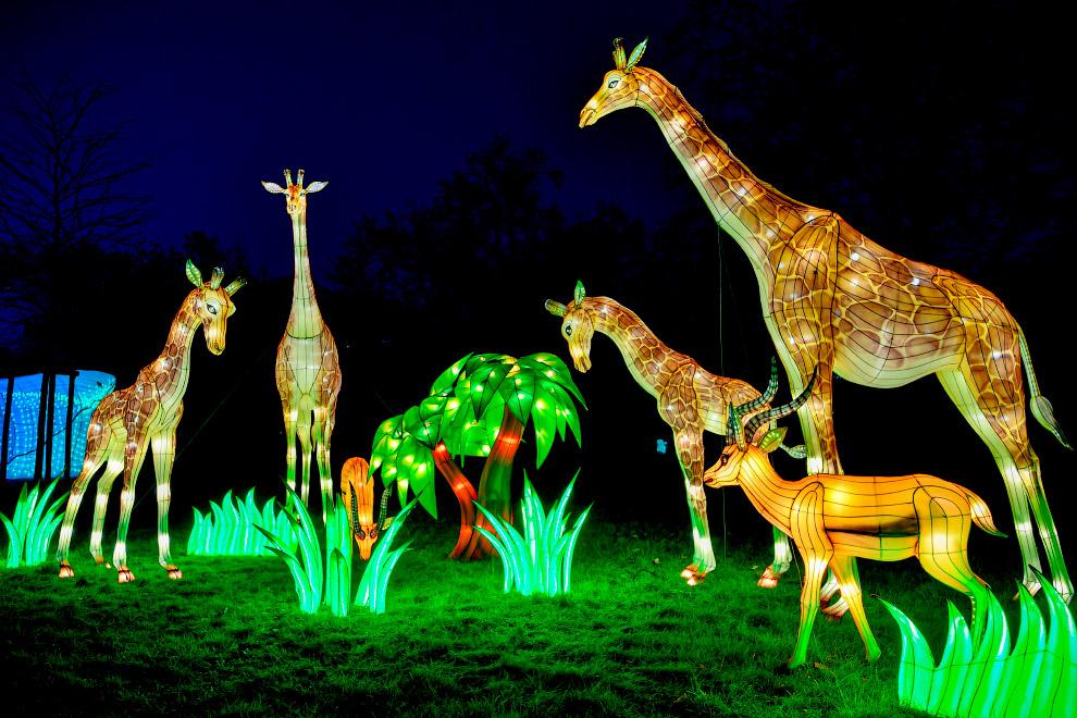 Как проходит фестиваль света в Кёльнском зоопарке