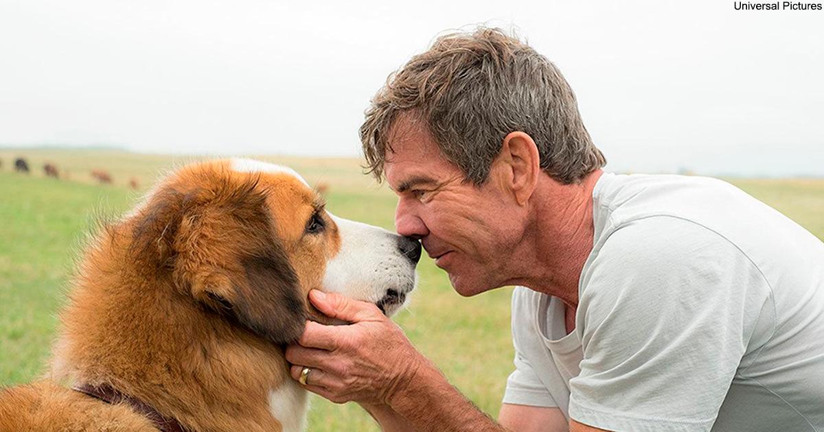 Собаки никогда не умирают: они остаются спать в наших сердцах