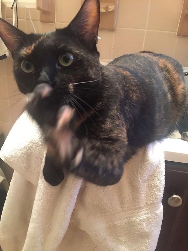 cat litter non tracking mat