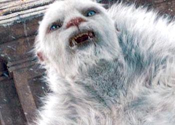 Создатели Monster Hunter: World предлагают 4 миллиона рублей за доказательства существования нереальных существ в реальности
