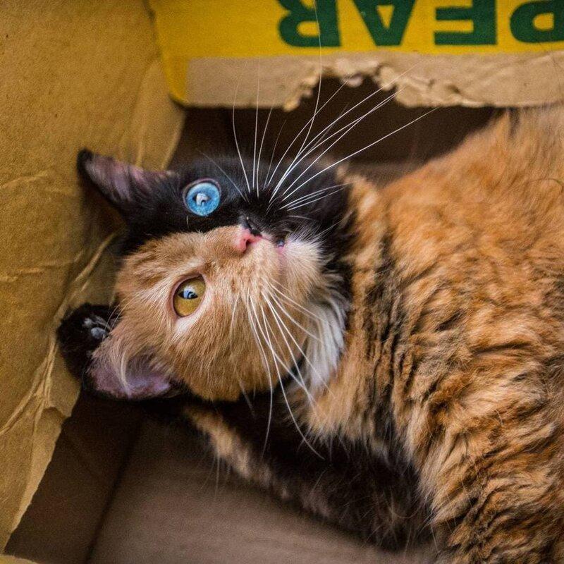 В честь чего, собственно, и получила имя эта красавица домашний питомец, животные, кошка, красота, окрас, смесь, химера