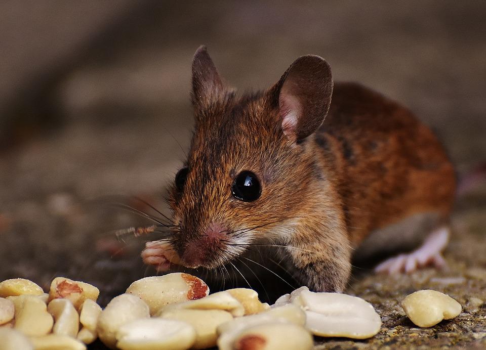 Маленькая жизнь. Правдивая и невероятная история об одном мышонке