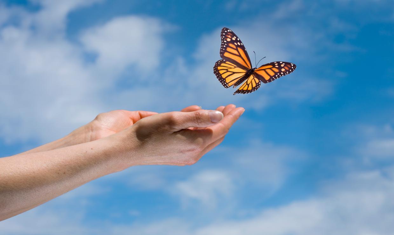Руки бабочка картинка