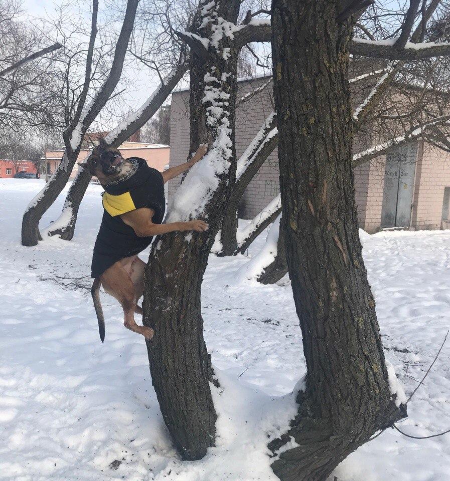Зимняя собака