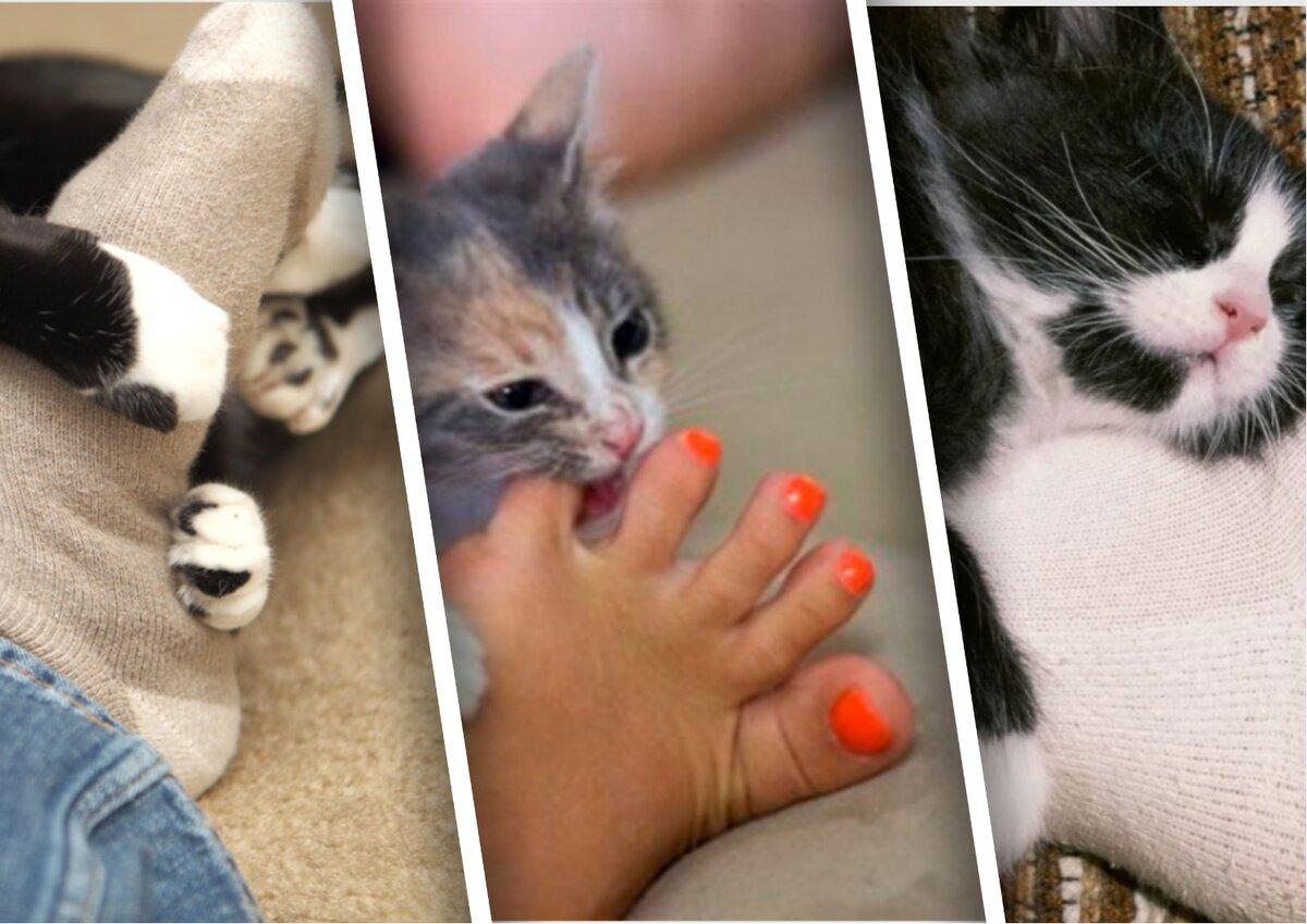 Славянские имена для котов  домашние животные,наши любимцы,позитив