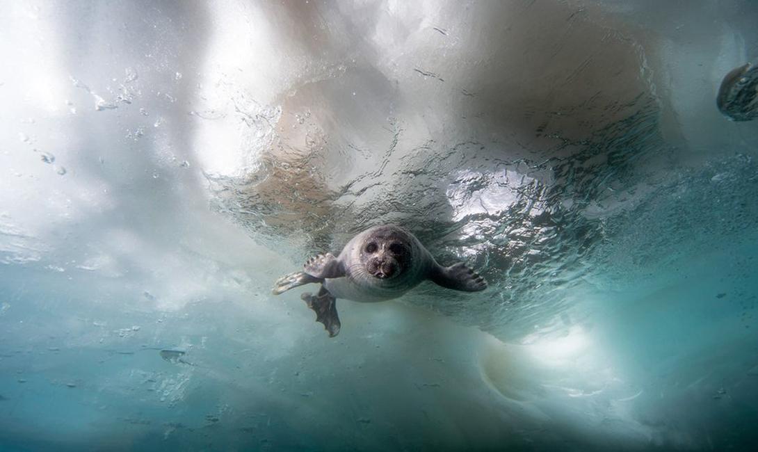 Магия льда. 10 самых красивых замерзших озер планеты озера, озеро, меньше, Байкал, самое, особенно, Зимой, Йокюльсадлон, одними, считаются, праву, замороженный, неподалеку, находящийся, Сегодня, привлекательноЙокюльсадлонИсландияЛедник, выглядит, главных, запаса, мирового