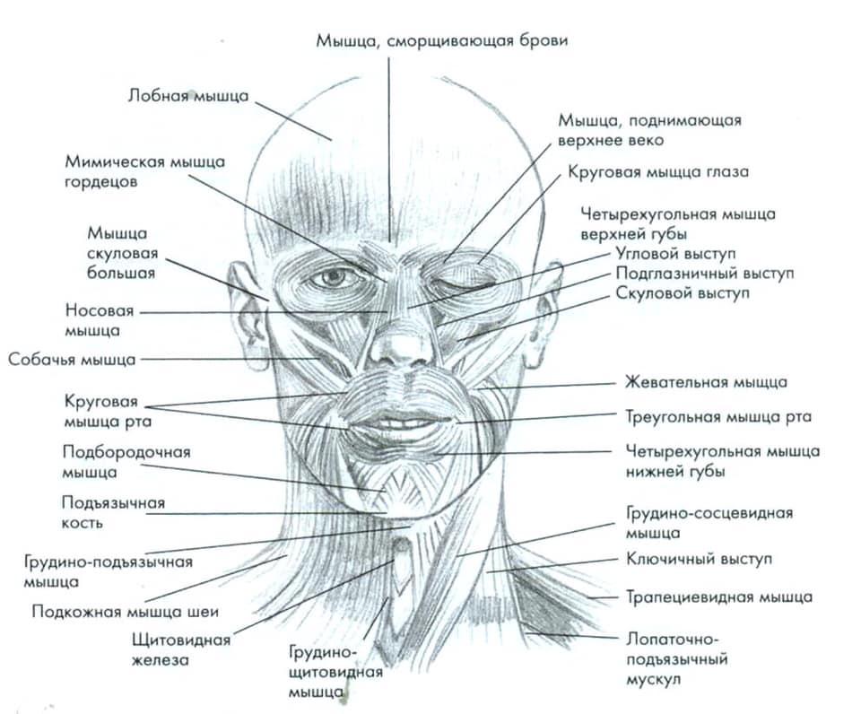 нашего мышцы лица фото с описанием и схемами доброго рыбака, поздравляю