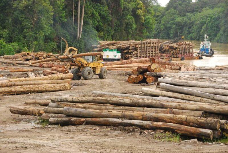 Норвегия решила полностью отказаться от вырубки лесов