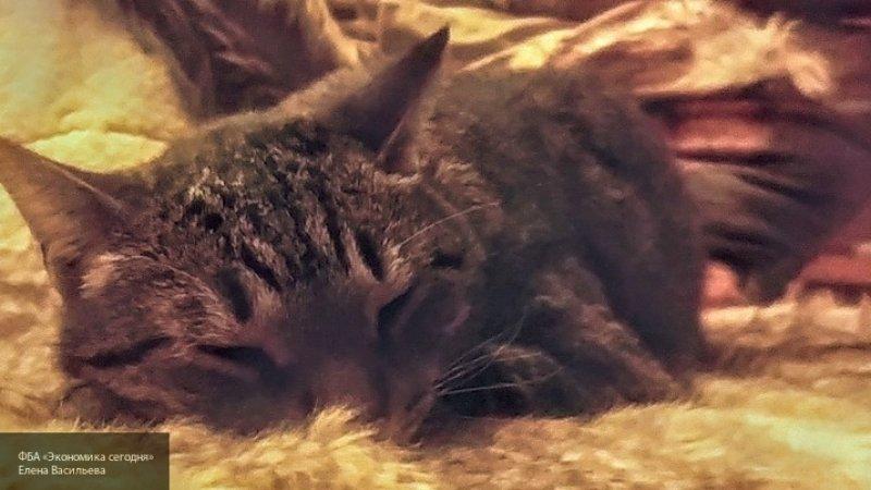 Соседи грозятся выкинуть 40 кошек, которых старушка содержит в однокомнатной квартире