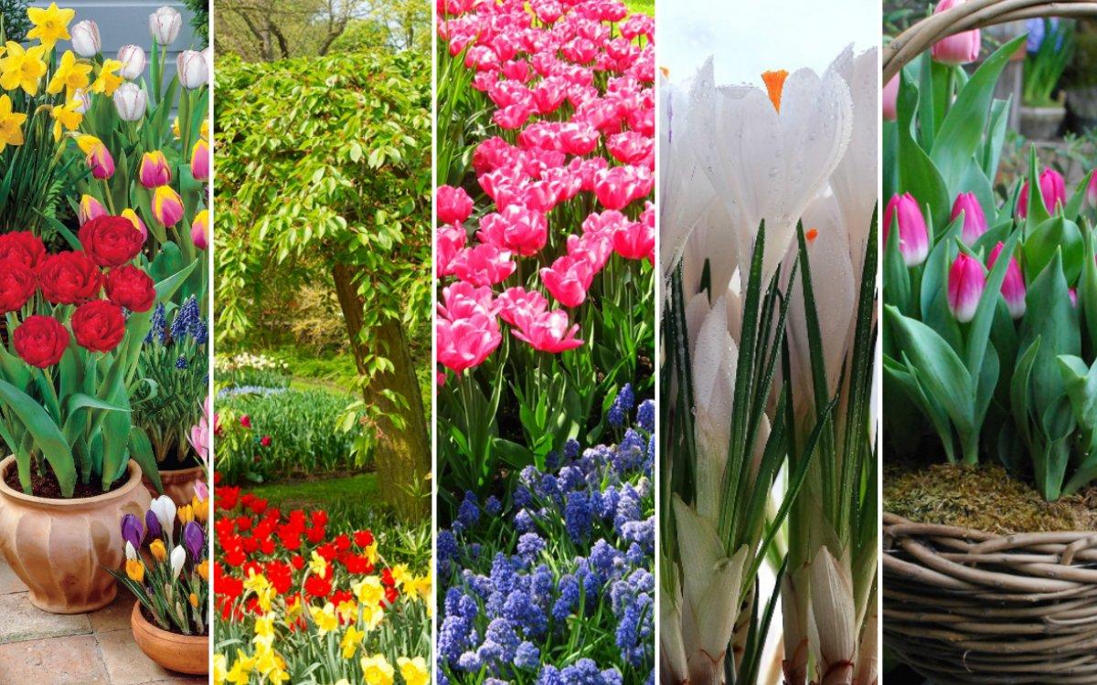 какие цветы садить весной фото и название смело ищем