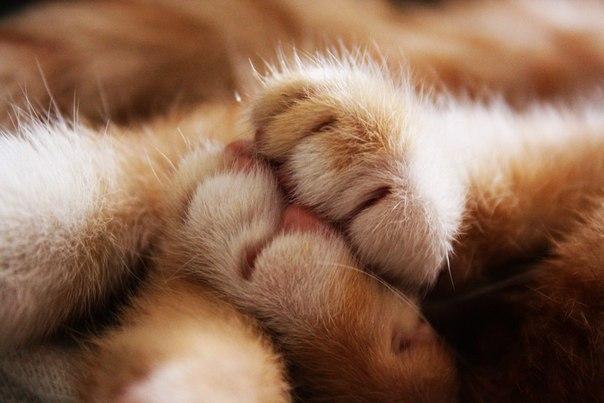 Коты – это ценнейший домашний ресурс. Они уют вырабатывают!