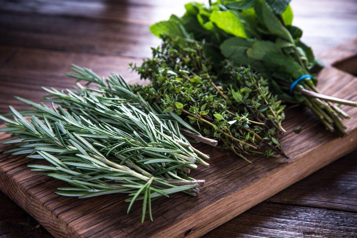 фото травы для кулинарии с фото такое натяжной