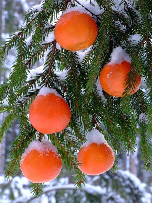 Картинки по запросу мандарины новый год