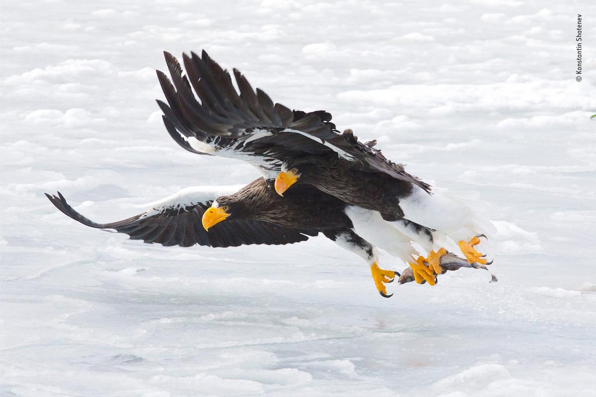 Изумляющие фотографии дикой природы с конкурса LUMIX People's Choice Award Природа