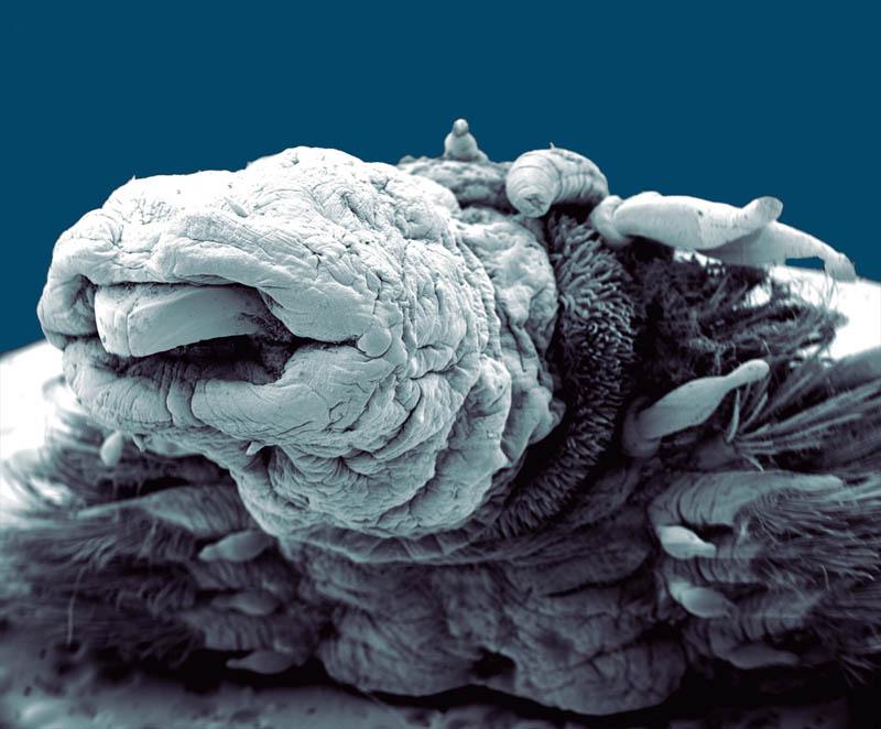 актрисы фотографии сделанные цифровым микроскопом никогда