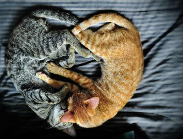 Невероятно нежные фотографии о семейной жизни... кошек