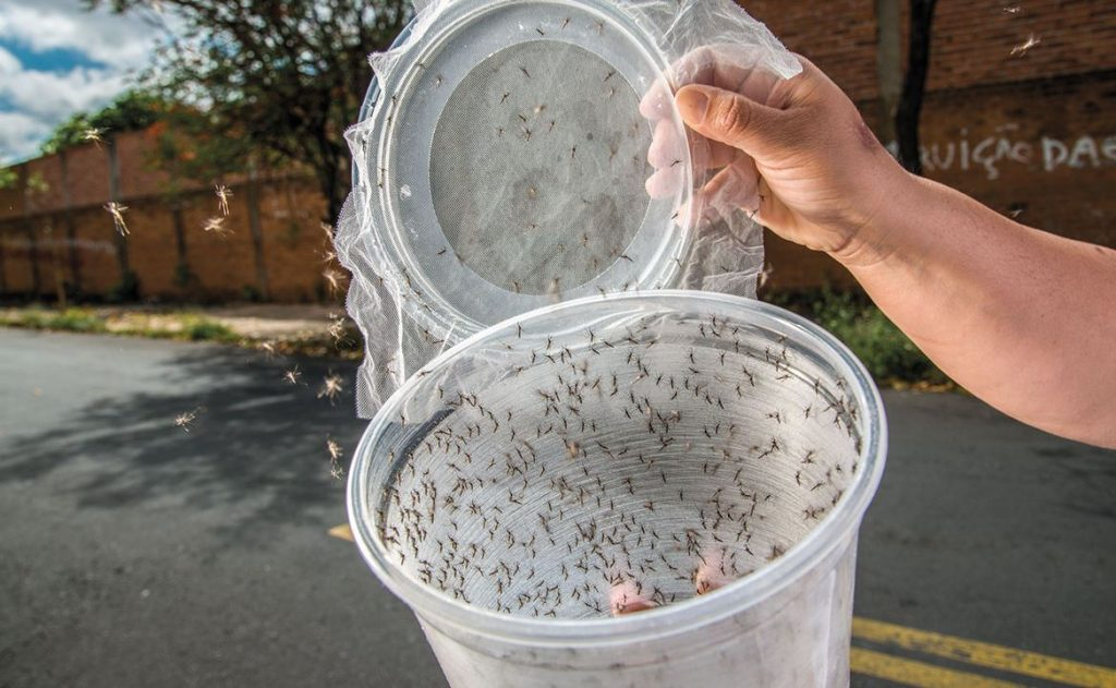 Боевые комары как спецназ мировой вирусной войны геополитика
