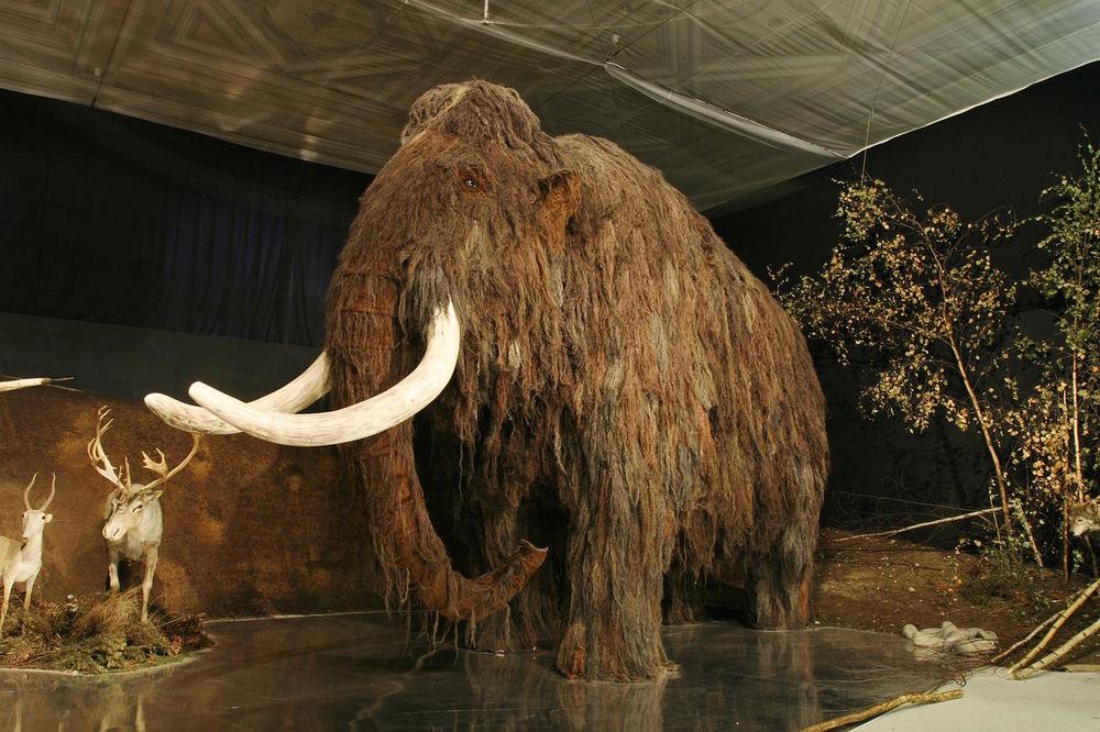 """Тайна последних дней: """"геномная катастрофа"""" погубила последних мамонтов на Земле"""