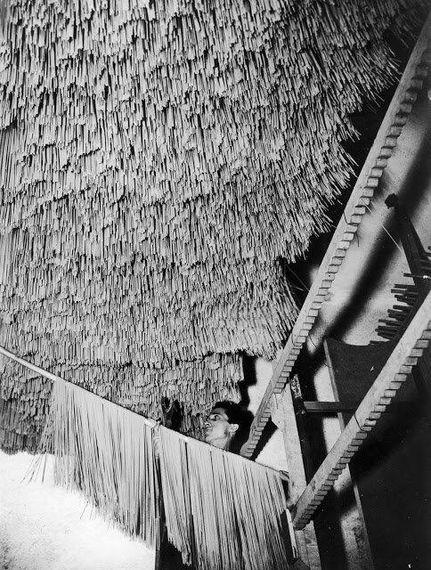 Редкие исторические фотографии: Как делали макароны в начале 20 века