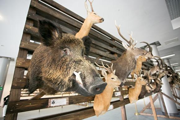«Мы имеем армию стрелков, которые не знаю ни биологию животных, ни их ценность»