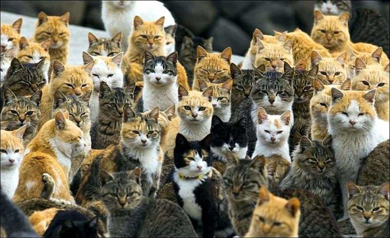 Самое распространенное в мире млекопитающее - домашний кот. информация, картинки, факты